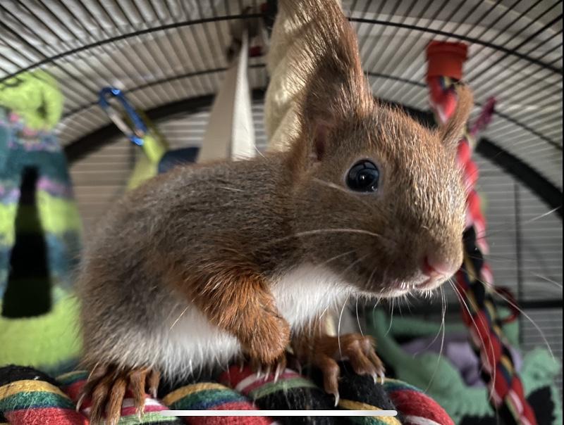 Eichhörnchenhilfe Eilbek