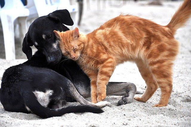 Hund und Katze kuscheln