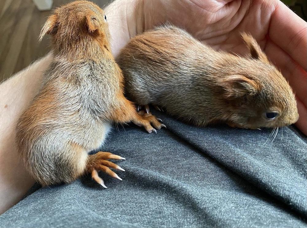 Eil und Bek - Die kleinen Eichhörnchen